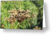 Dead Thistle Greeting Card