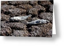 Salton Sea Dead Tilapia Greeting Card