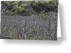 Dead Tree Garden Greeting Card