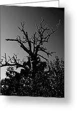 Dead Tree II Greeting Card
