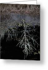 Dead Tree Reflects In Black Water Greeting Card