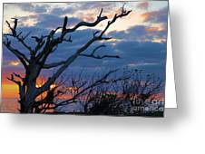 Dead Trees At Sunrise Greeting Card