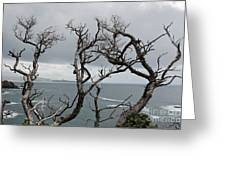 Dead  Trees Greeting Card by Yurix Sardinelly