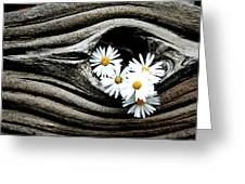 Dead Wood And Asters Greeting Card