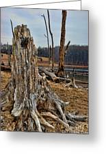 Dead Wood Greeting Card by Paul Ward