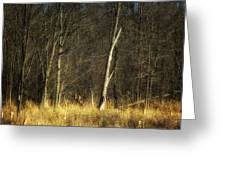Deadwood Napanee Greeting Card