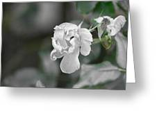 Death Of A Flower Greeting Card
