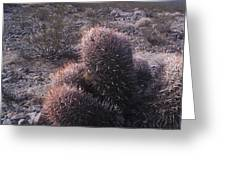 Death Valley Cactus Greeting Card