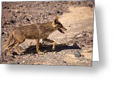 Death Valley Coyote Greeting Card