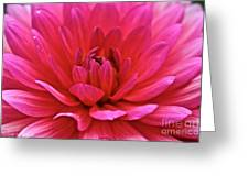Decadent Dahlia Greeting Card