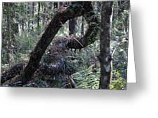 Decaying Tree Greeting Card