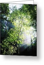 Deciduous Wood, Killarney National Greeting Card