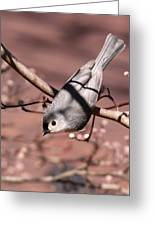 Decked Out - Tufted Titmouse Greeting Card