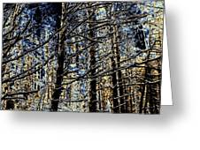 Deep In The Moonlit Forest Greeting Card