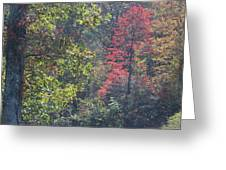 Deep In The Wood Greeting Card