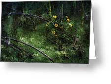 Deep Into Nature Greeting Card