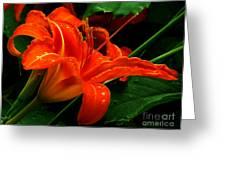 Deep Orange Day Lily Greeting Card