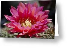 Deep Pink Cactus Flower Greeting Card