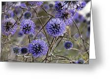 Deep Purple 04 Greeting Card
