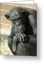 Gorilla Deep Thoughts Greeting Card