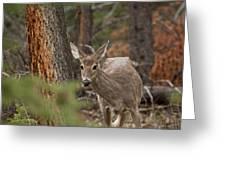 Deer 1660 Greeting Card