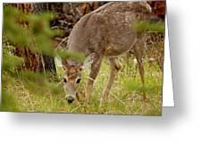 Deer 1661 Greeting Card