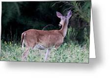 Deer - Doe - I Heard Something Greeting Card