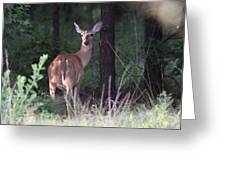Deer - Doe - Nearing The Edge Greeting Card
