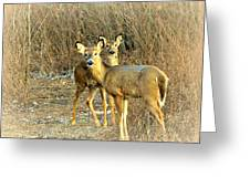 Deer Duo Greeting Card