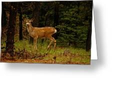 Deer Gazing  Greeting Card