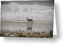 Deer In Ocean Surf Greeting Card