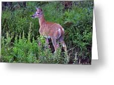Deer In The Marsh Greeting Card