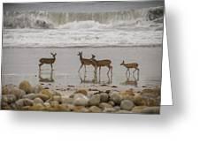 Deer On Beach Greeting Card