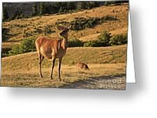 Deer On Mountain 2 Greeting Card