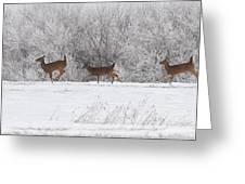 Deer Parade Greeting Card