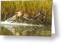 Deer Running Through The Salt Marsh Greeting Card
