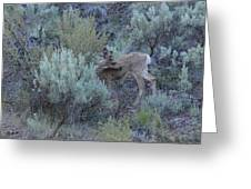 Deer Scratching Itch Greeting Card