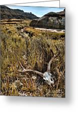 Deer Skull In Montana Badlands Greeting Card