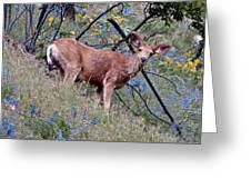 Deer Standing In Wildflowers Greeting Card