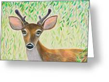 Deer Visitor Under The Willow Tree Greeting Card
