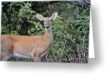 Deer Watch Greeting Card
