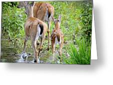 Deer Running In Stream Greeting Card