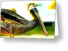 Deerfield Pelican Greeting Card
