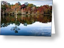 Beaver's Bend Defiant Cypress Greeting Card