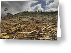 Deforested Area Greeting Card by Ned Frisk