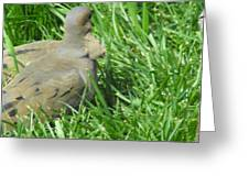 Deformed Dove Greeting Card
