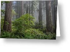 Del Norte Redwoods Greeting Card