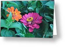 Delias Greeting Card