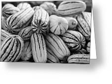 Delicata Winter Squash In Black Greeting Card