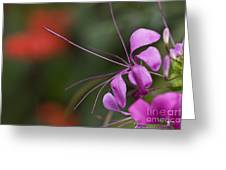 Delicate Blossom Greeting Card